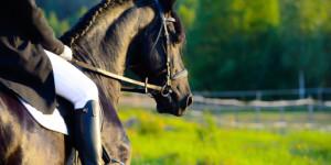 Grupo M Hotéis - Espinho - Equitação